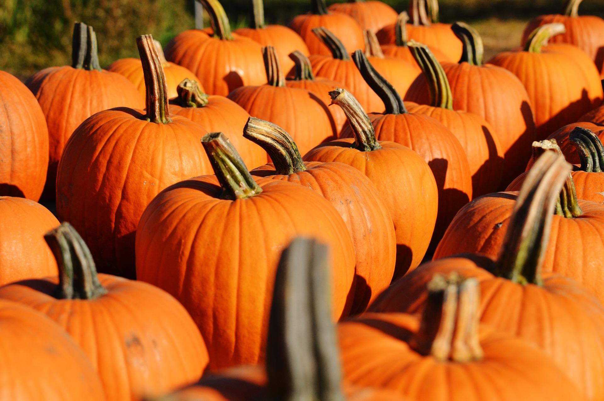 pumpkin-970235_1920